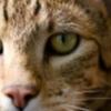 cat fritz