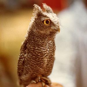 Profile picture for Edward de Vere