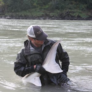 Profile picture for Sturgeon and Fly Fishing in BC