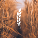 Good Grain Creative