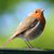 Simbird | Art Birds Wildlife UK