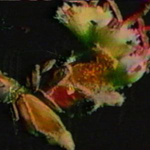Profile picture for swamprabbit