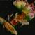 swamprabbit