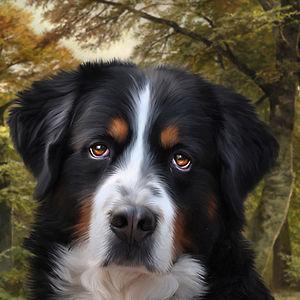 Profile picture for Julie Hoddinott