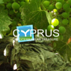Wine Cyprus