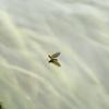 Dub A Fly