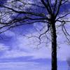 Sleeping Tree Pictures