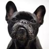 Raul 'The Bulldog' Duke