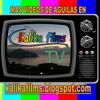 Kalika Films