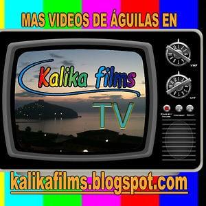 Profile picture for Kalika Films