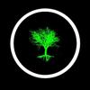 Dead Elm