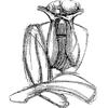 Twisty-Headed Man Company