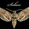 Solace Moth