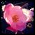 Tales of Flowering Fortune