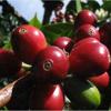 Coffee Real Ltd