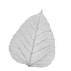 Profile picture for I Am Autumn