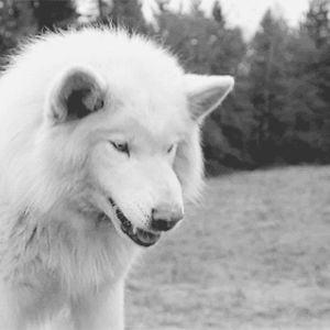 Profile picture for Digitalwolf