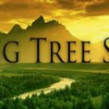 Falling Tree Sound