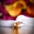 Wedding Concepts Video