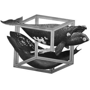 Profile picture for Whales In Cubicles