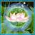 Lotus Diamond