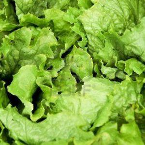 Profile picture for salad head