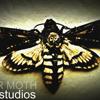 Paper Moth Studios