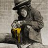 mono mango