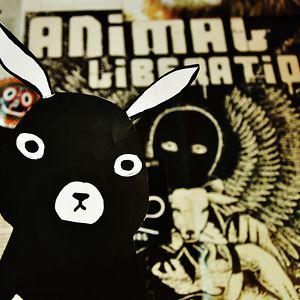 Profile picture for Vegan Bunnies