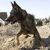 Dogs of War: The Fight Back Home