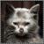 Jamiecat