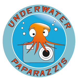 Profile picture for Underwater Paparazzis