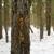 Bold Woods
