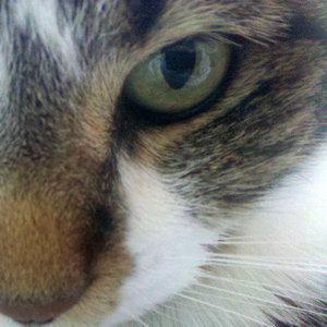 Profile picture for Zippidy Doodah