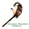 Associazione Codibugnolo