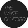 The White Bluebird