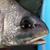 fishbeer