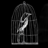 Caged Magpie Productions