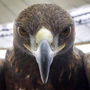 Profile picture for Eintracht Frankfurt