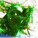 Green Auntie