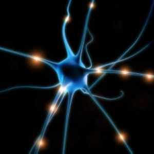 Profile picture for The Neuropsychotherapist