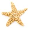 Starfish Films