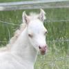 Mt Dragon Pony Acres