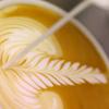 Boréal Coffee Roasters