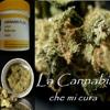 legalizzamenostress