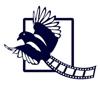 PY vidéo production