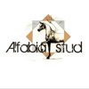 Alfabia Stud