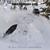 joydigger snowmobiling