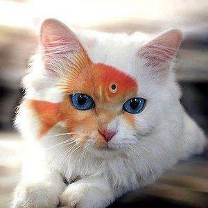 Profile picture for Michael Leventakis