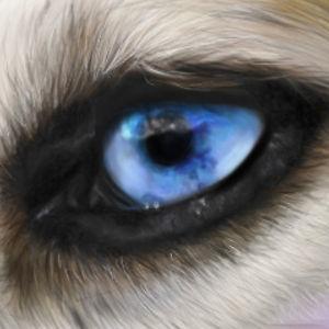 Profile picture for huskyjackal